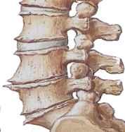 Die Gymnastik bei der Osteochondrose der Wirbelsäule des Bildes